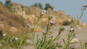 Греко-скифское городище IV в.д.н.э